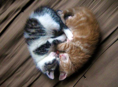 Calm down with some kittens.