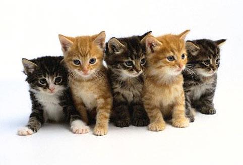 Hey look! Kittens!