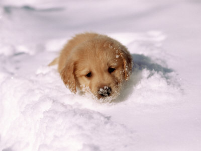 puppy-on-a-snowy-day
