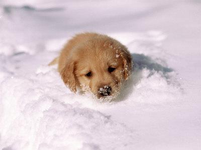 puppy-on-a-snowy-day